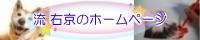 流 右京のホームページ